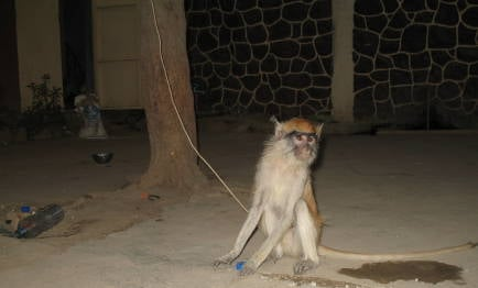 monkeyndja.jpg