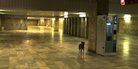 Central Station Sofia SHORT